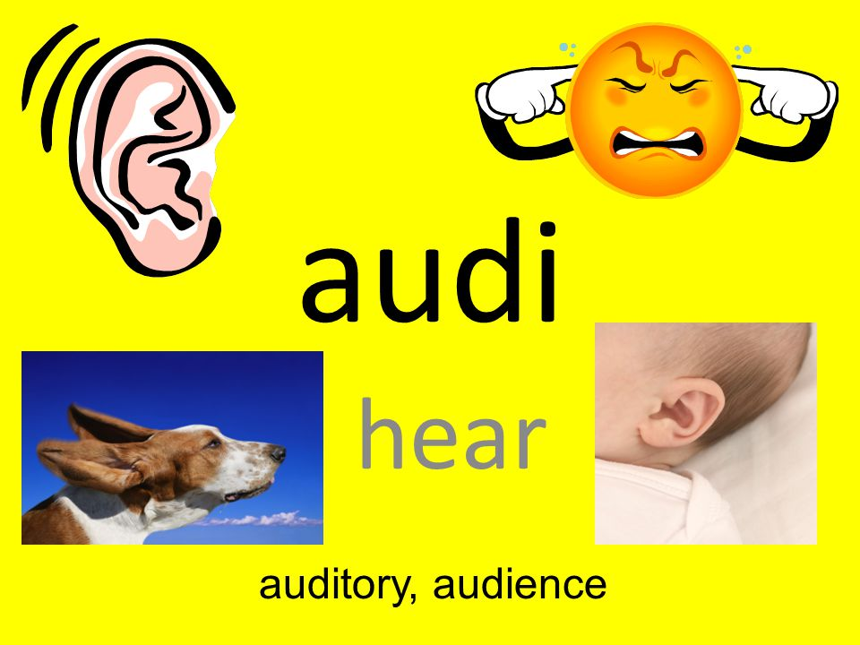 audi hear auditory, audience