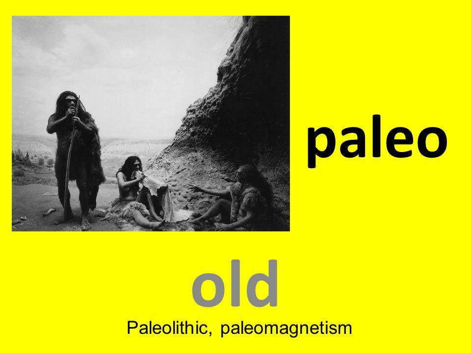 Paleolithic, paleomagnetism