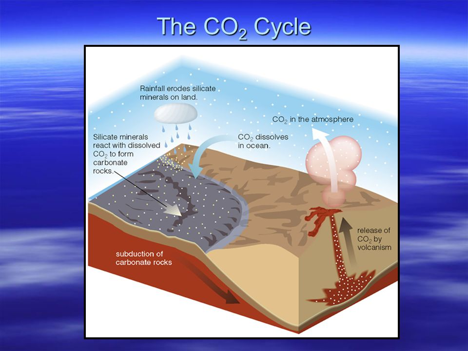 The CO2 Cycle