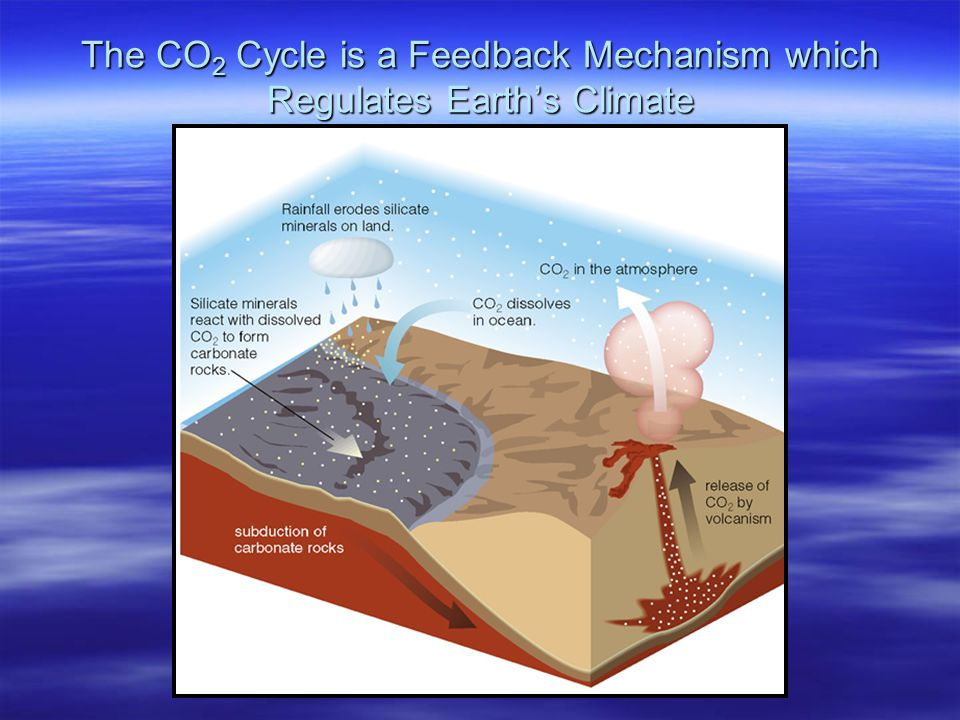 The CO2 Cycle is a Feedback Mechanism which Regulates Earth's Climate