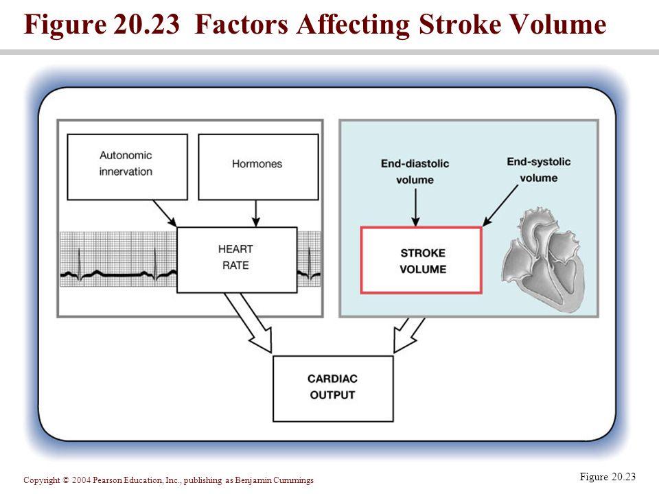 Figure 20.23 Factors Affecting Stroke Volume