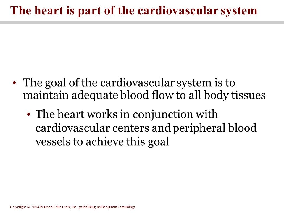 The heart is part of the cardiovascular system