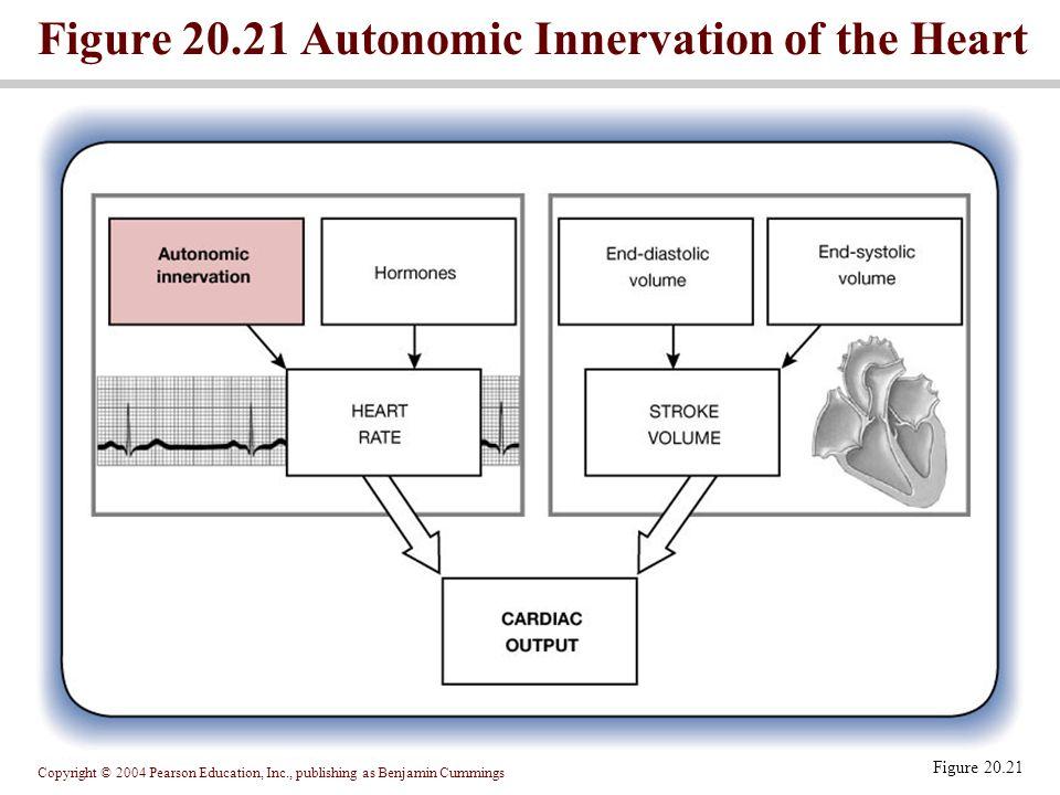 Figure 20.21 Autonomic Innervation of the Heart