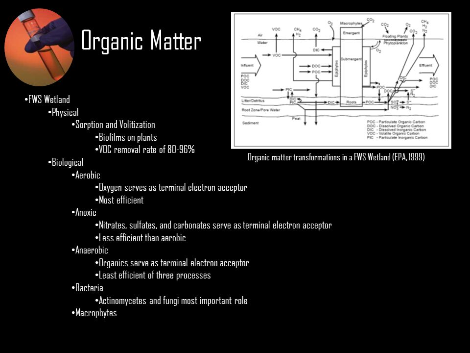 Organic Matter FWS Wetland Physical Sorption and Volitization