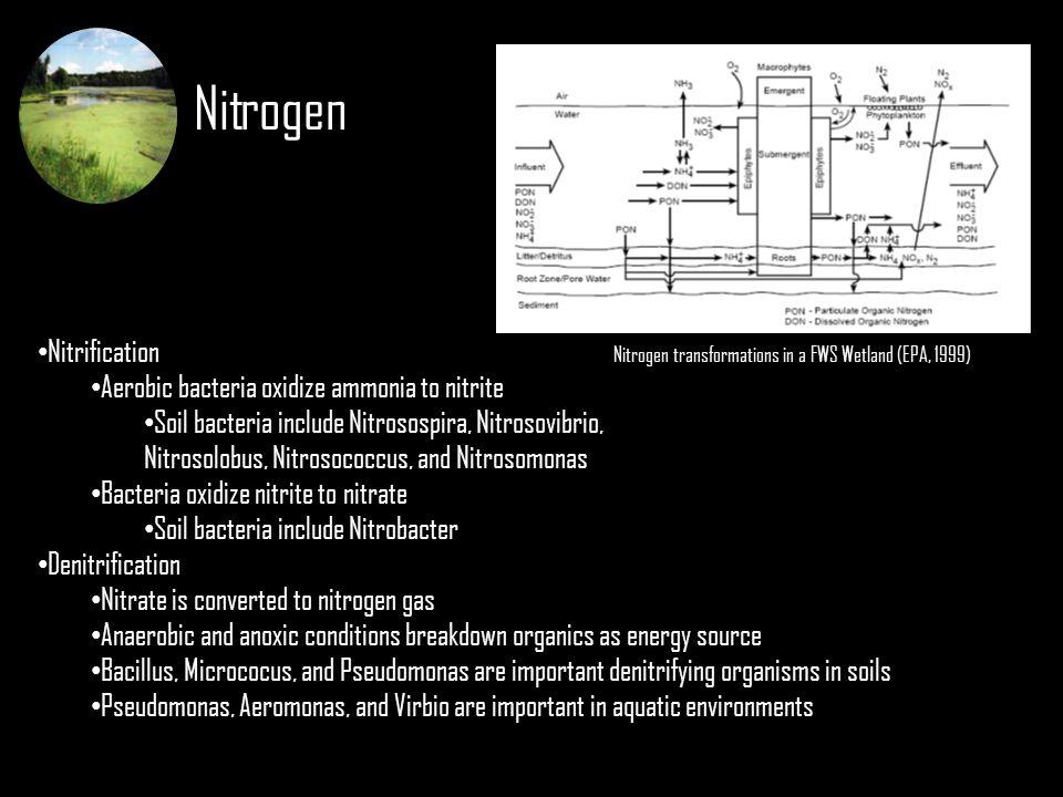 Nitrogen Nitrification Aerobic bacteria oxidize ammonia to nitrite