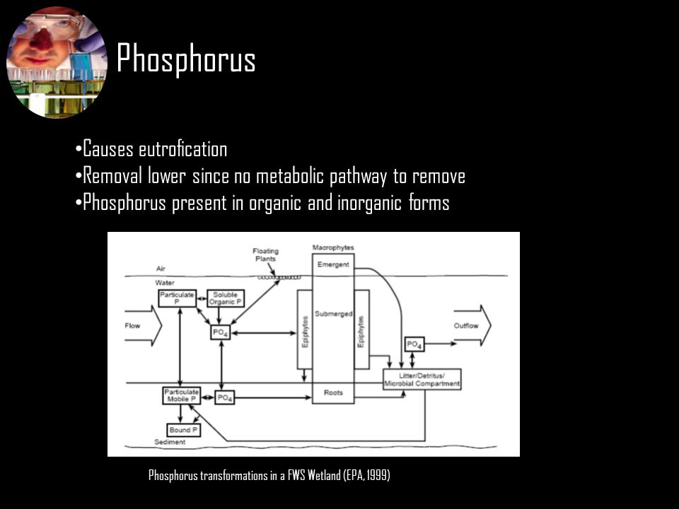 Phosphorus Causes eutrofication