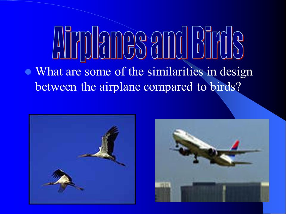 Airplanes and Birds What are some of the similarities in design between the airplane compared to birds