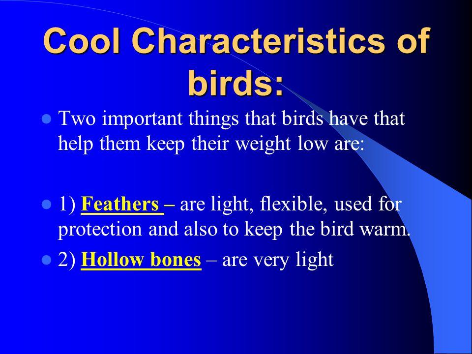 Cool Characteristics of birds: