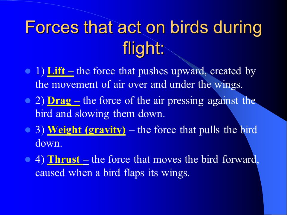 Forces that act on birds during flight: