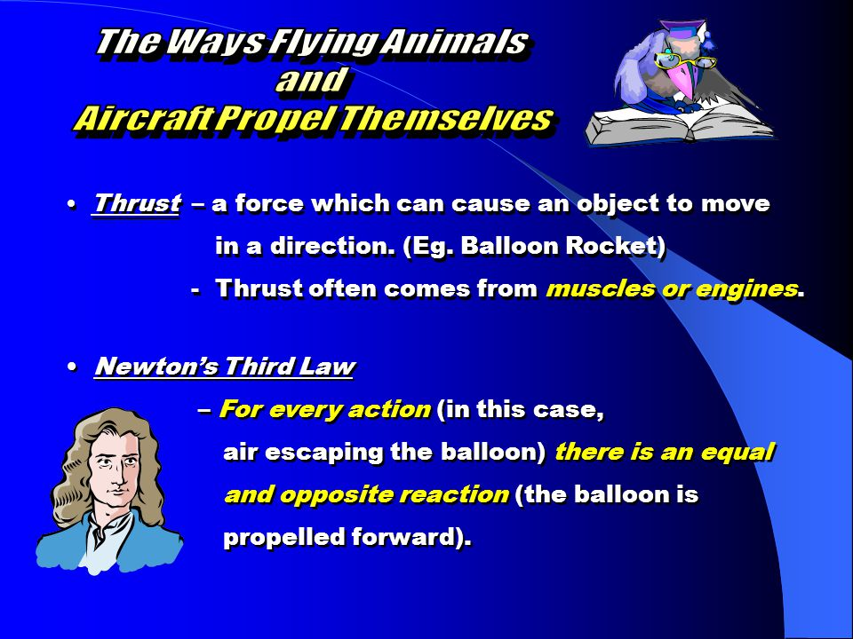 The Ways Flying Animals Aircraft Propel Themselves