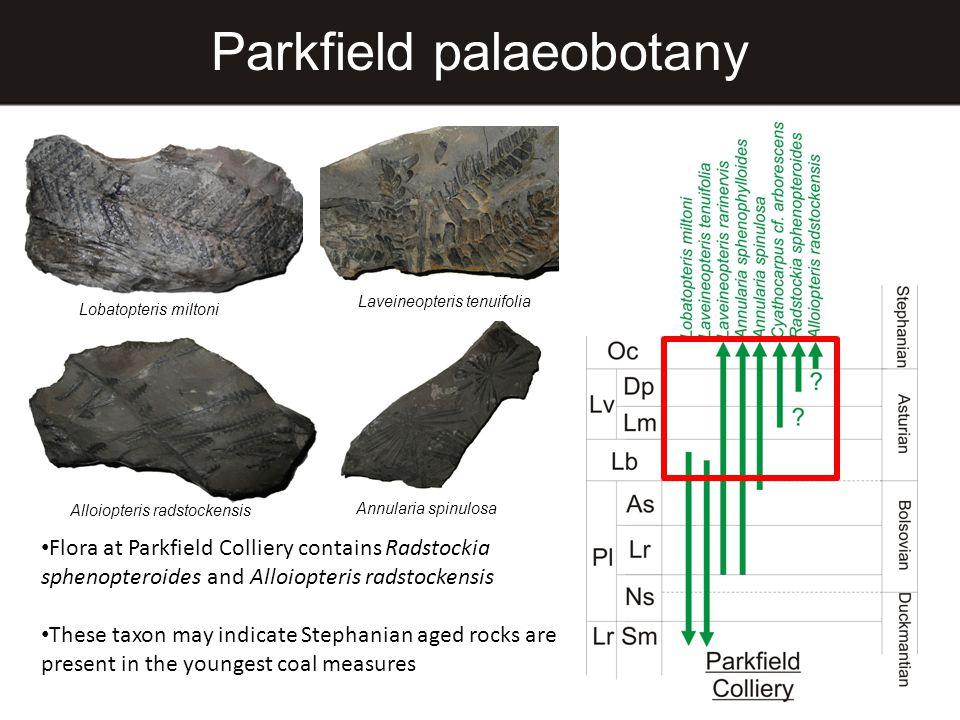 Parkfield palaeobotany