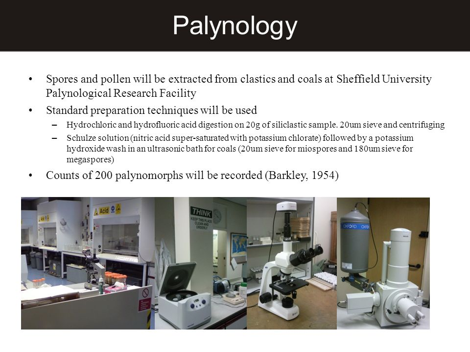 Palynology Spores and pollen will be extracted from clastics and coals at Sheffield University Palynological Research Facility.
