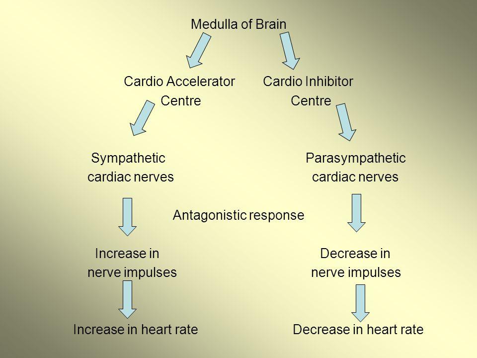 Cardio Accelerator Cardio Inhibitor Centre Centre