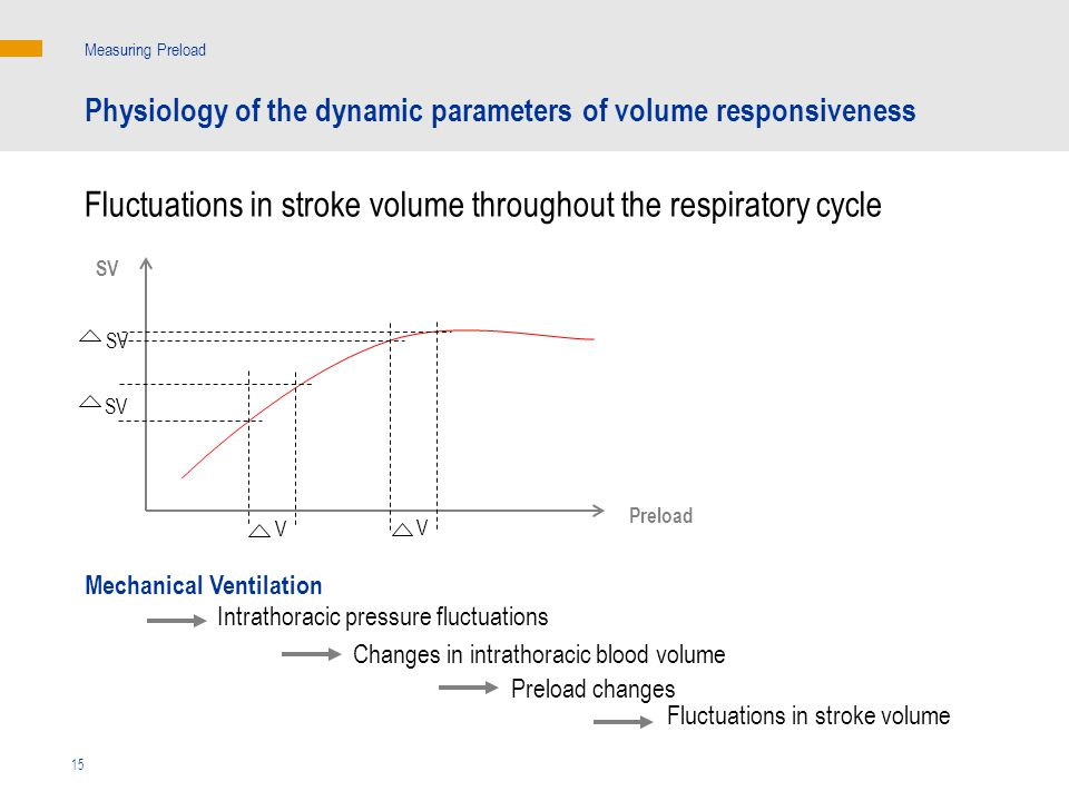 Fluctuations in stroke volume throughout the respiratory cycle