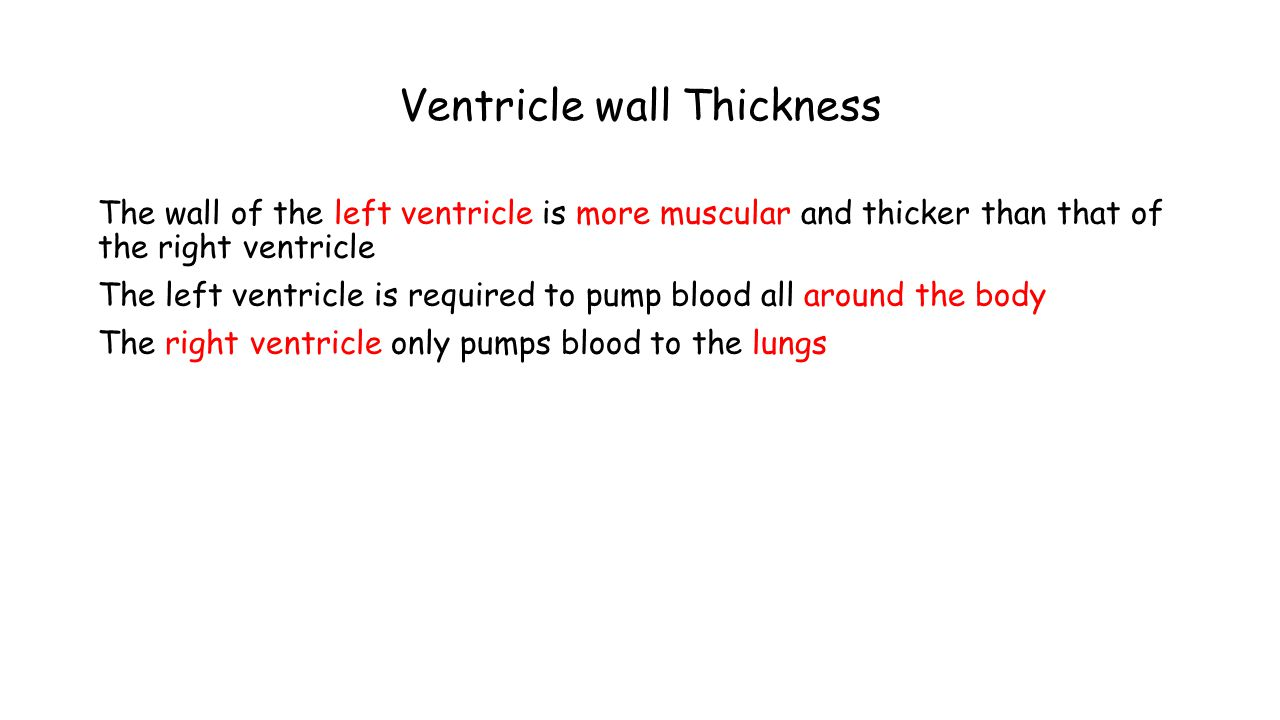 Ventricle wall Thickness