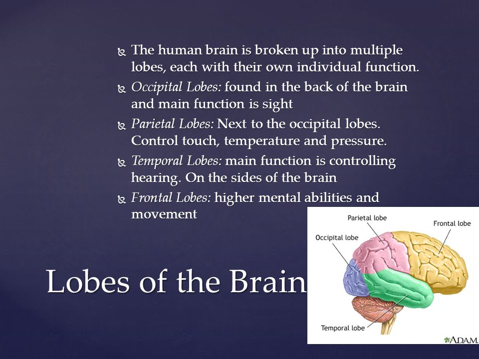 The human brain is broken up into multiple lobes, each with their own individual function.