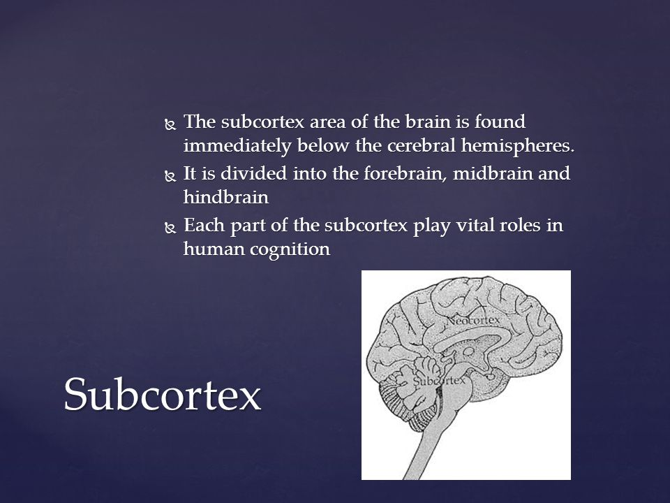 The subcortex area of the brain is found immediately below the cerebral hemispheres.