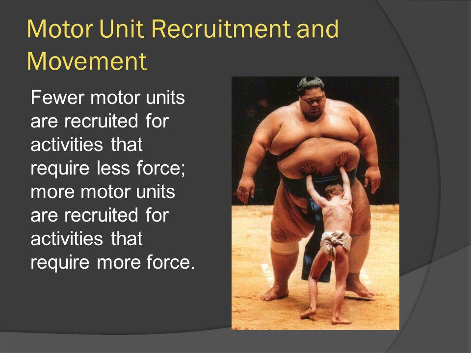 Motor Unit Recruitment and Movement