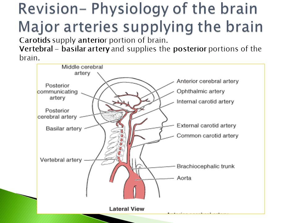 Revision- Physiology of the brain Major arteries supplying the brain