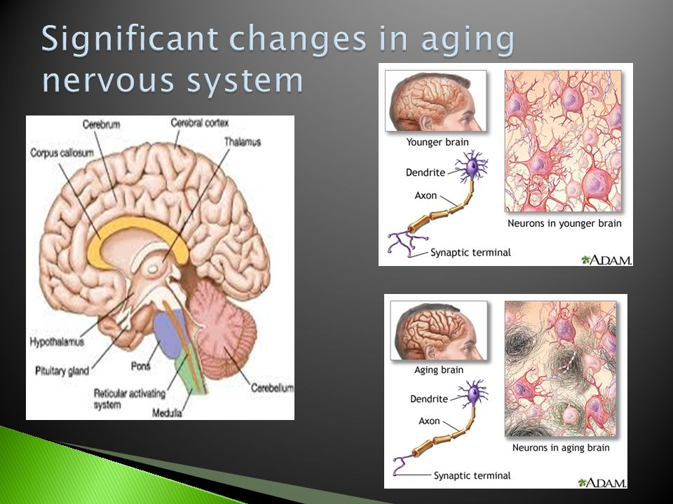 Significant changes in aging nervous system