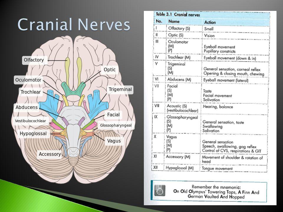 Cranial Nerves Jarvis (2004). Pocket companion.