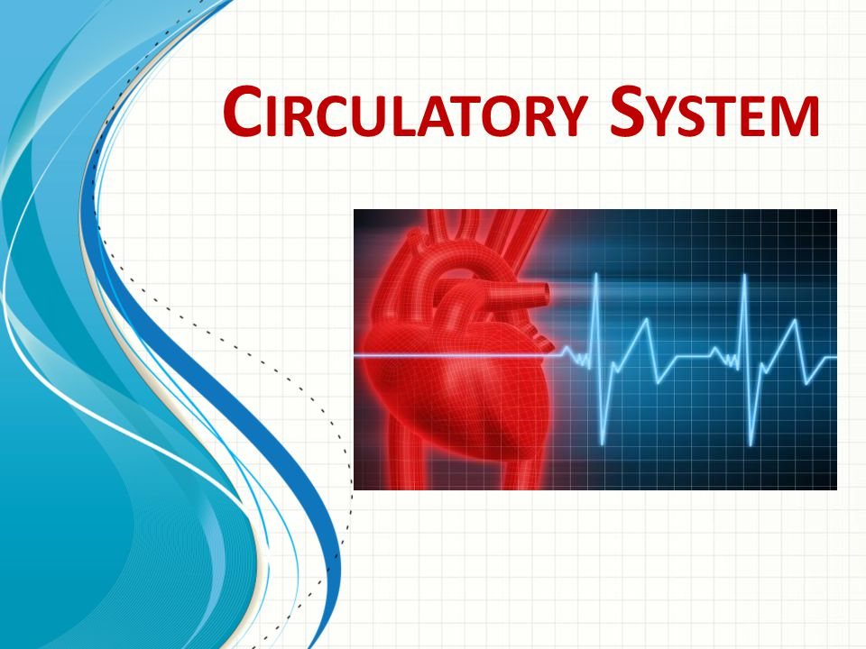 Circulatory System This template can be used as a starter file for presenting training materials in a group setting.