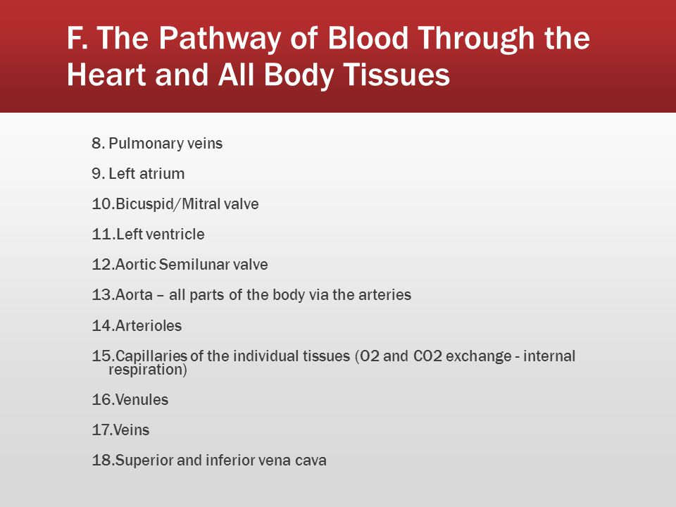 F. The Pathway of Blood Through the Heart and All Body Tissues