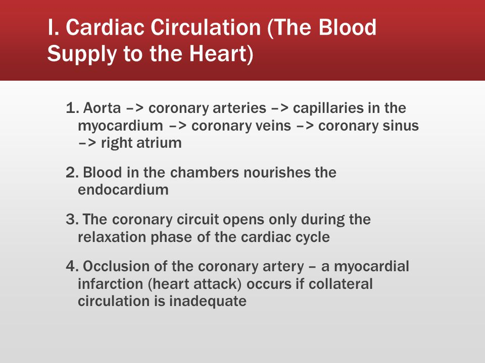I. Cardiac Circulation (The Blood Supply to the Heart)
