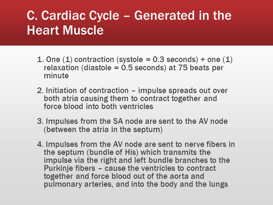 C. Cardiac Cycle – Generated in the Heart Muscle