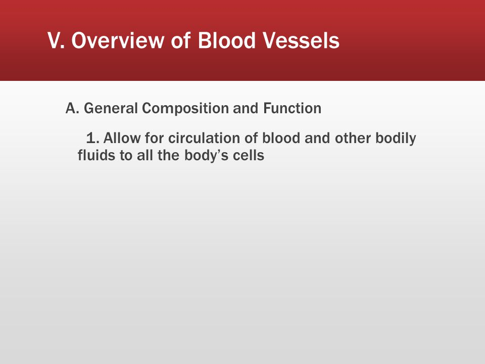 V. Overview of Blood Vessels