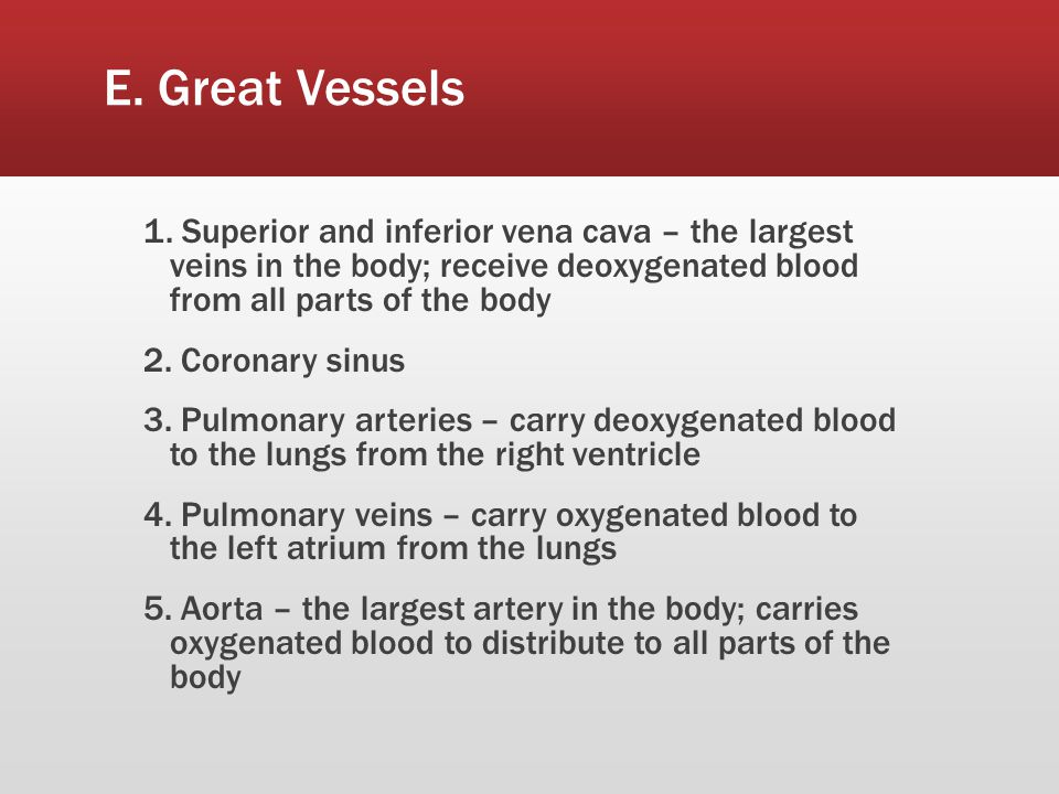 E. Great Vessels