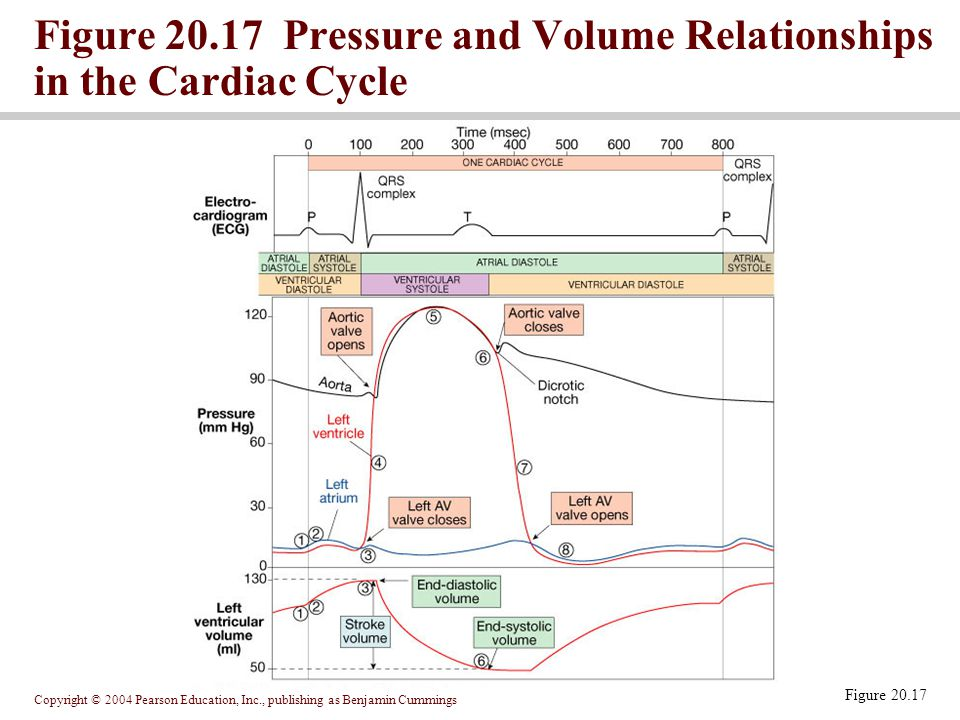 Figure 20.17 Pressure and Volume Relationships in the Cardiac Cycle