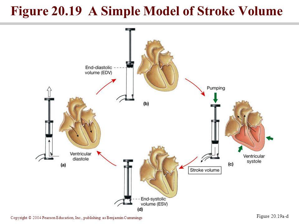 Figure 20.19 A Simple Model of Stroke Volume