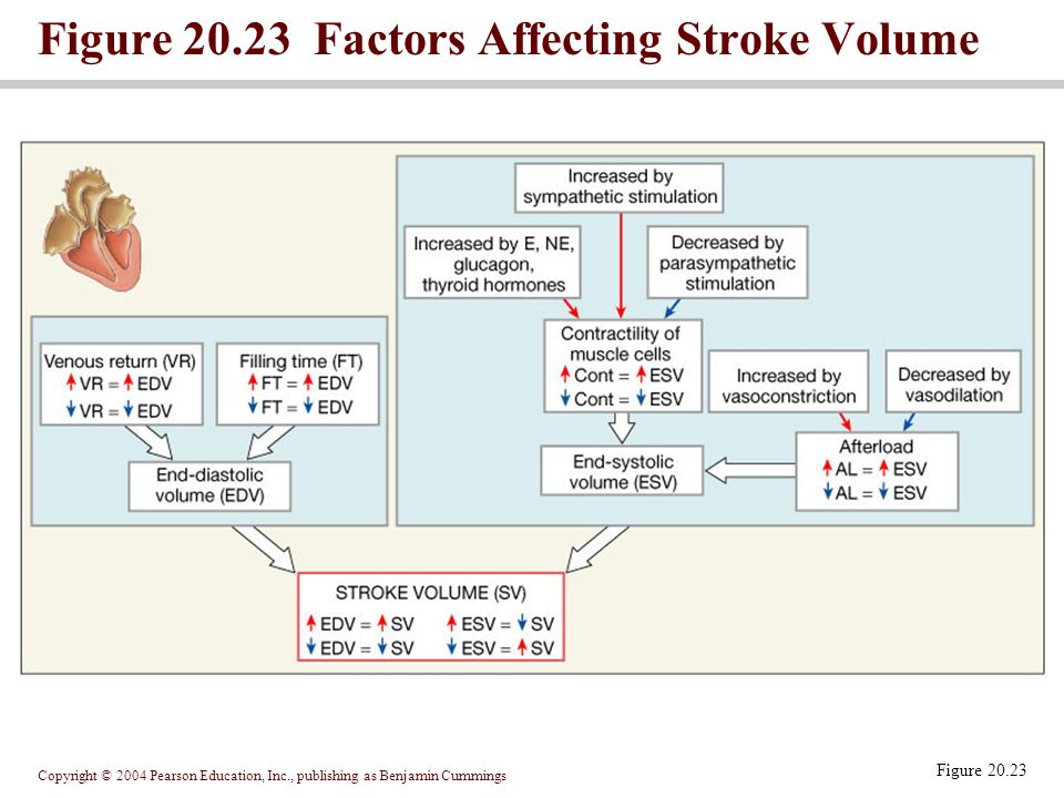 Figure 20.23 Factors Affecting Stroke Volume