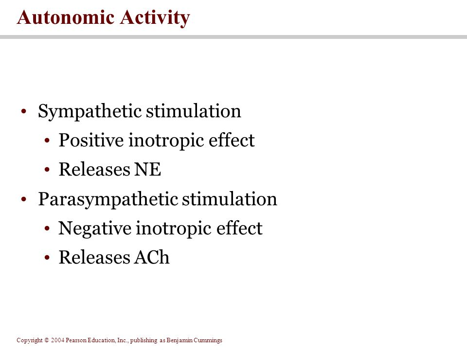 Autonomic Activity Sympathetic stimulation Positive inotropic effect