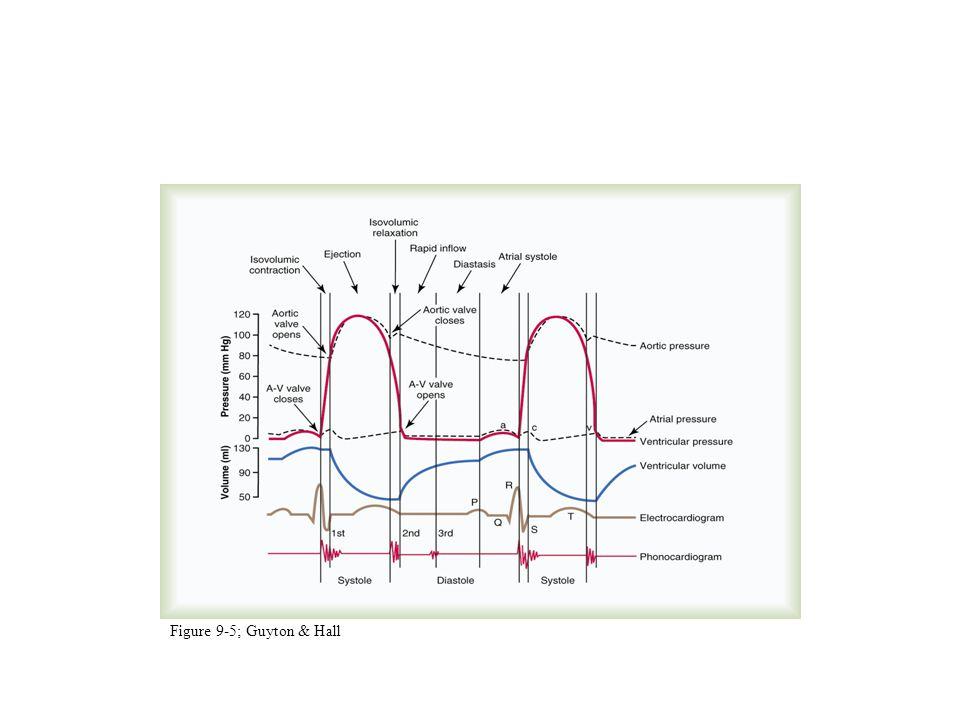 Cardiac Cycle (cont'd)