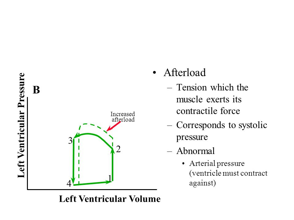 Afterload B Tension which the muscle exerts its contractile force