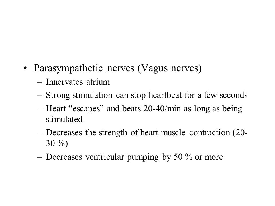 Parasympathetic nerves (Vagus nerves)