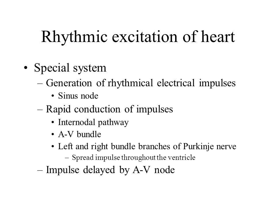 Rhythmic excitation of heart