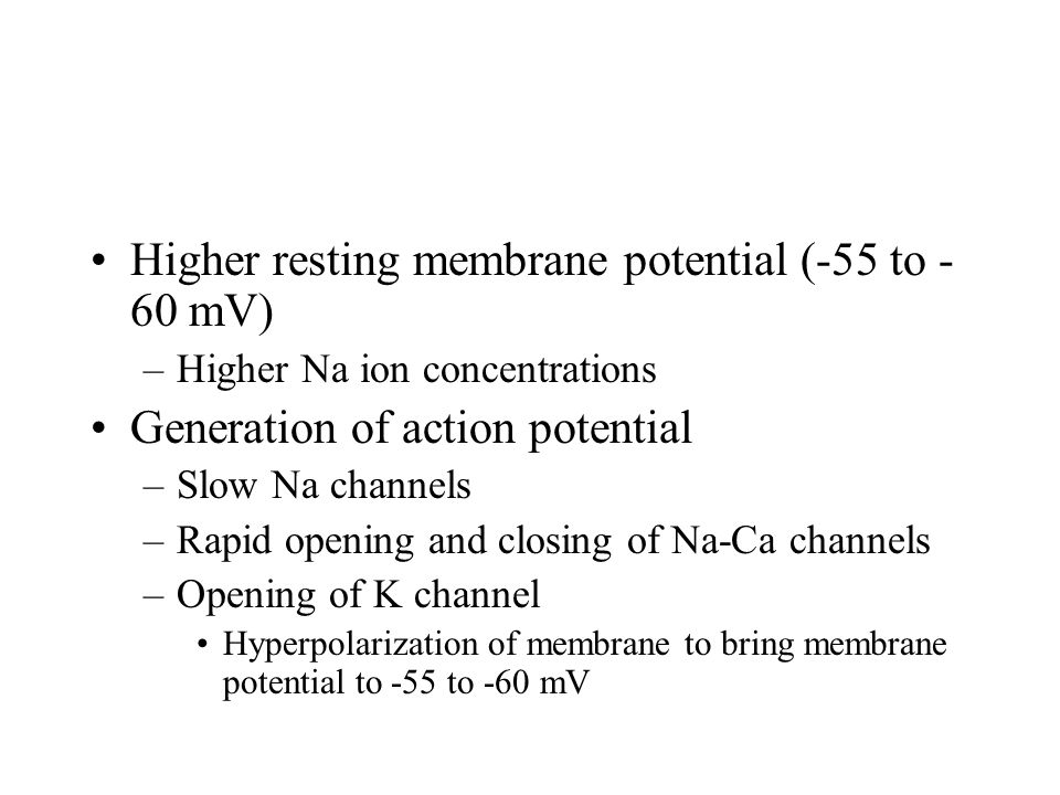 Higher resting membrane potential (-55 to -60 mV)