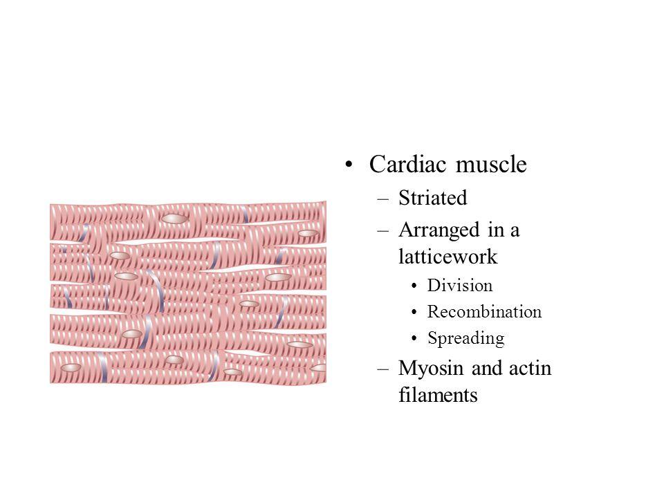 Cardiac muscle Striated Arranged in a latticework