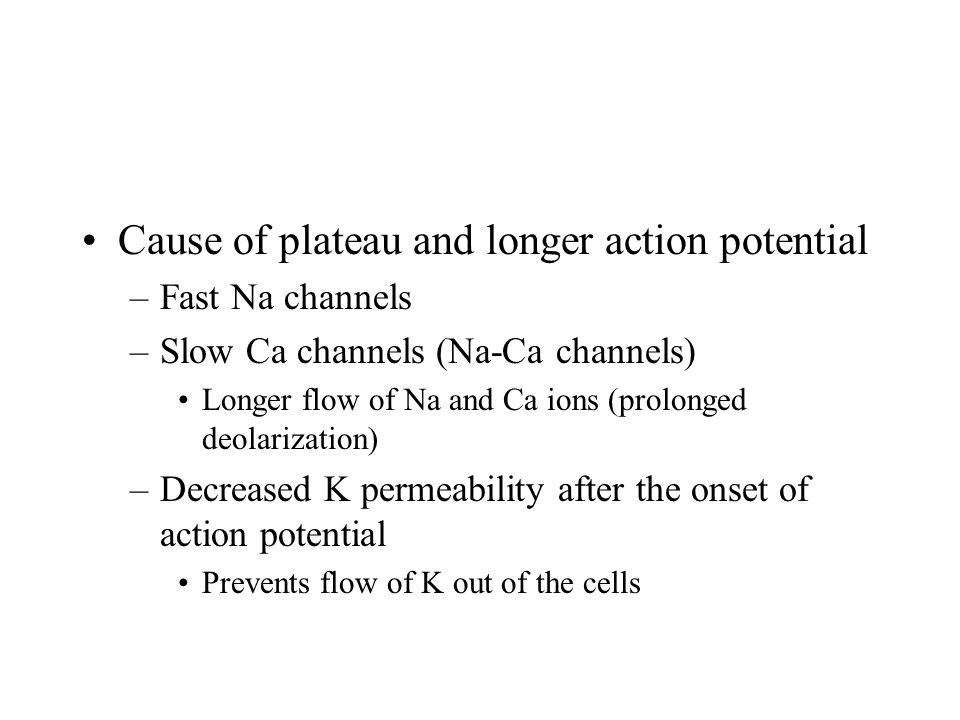 Cause of plateau and longer action potential