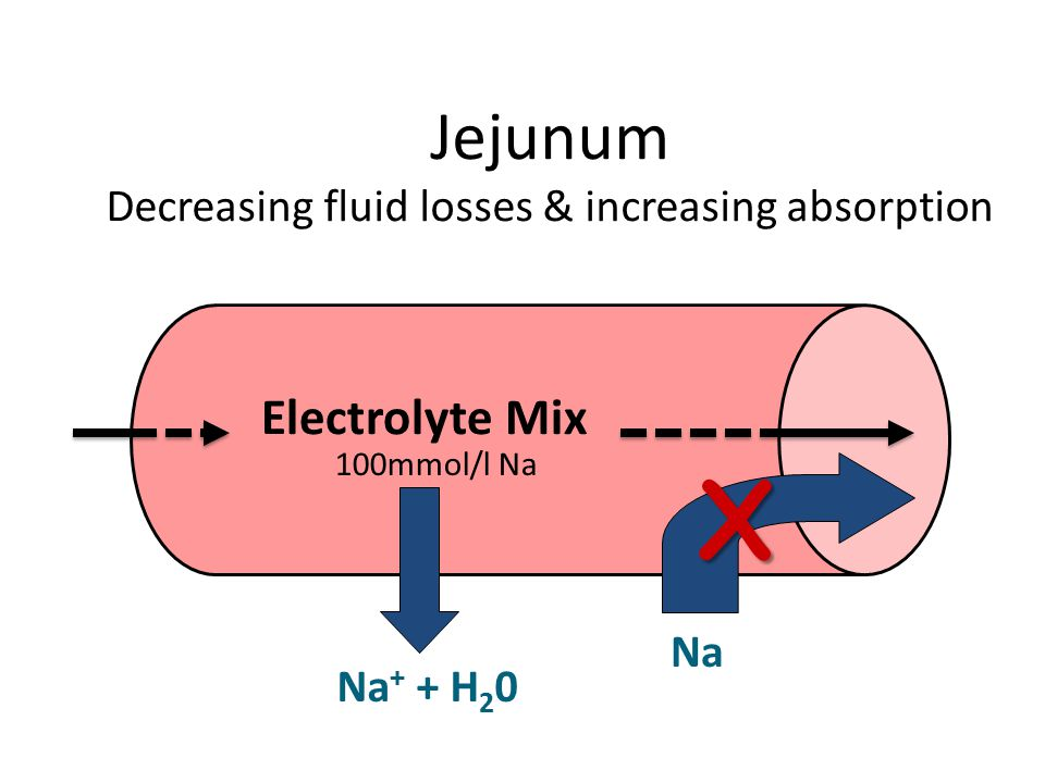 Jejunum Decreasing fluid losses & increasing absorption