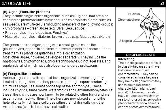 3.1 OCEAN LIFE 3. Fungi (fungi)