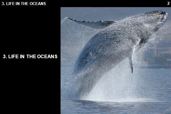 3.1 OCEAN LIFE 3.1 OCEAN LIFE