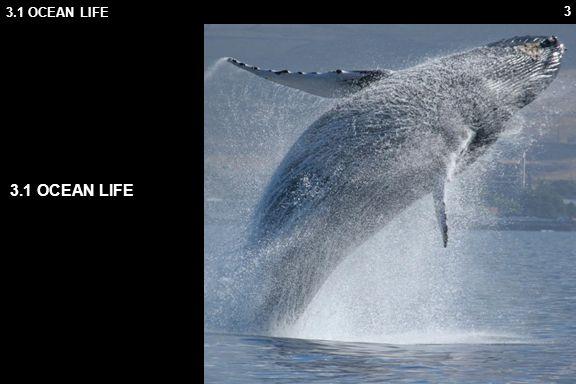 3.1 OCEAN LIFE 3.1 OCEAN LIFE 3.1.1 Origin Of Life
