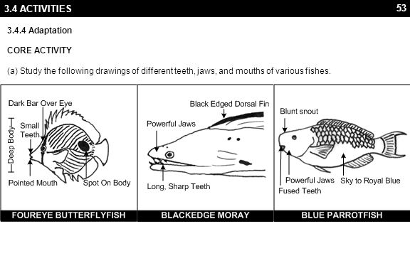 3.4 ACTIVITIES (b) What does a parrotfish eat Why are their teeth and jaws well-adapted to what they eat