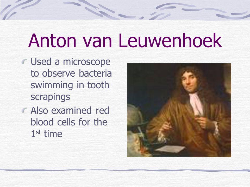 Anton van Leuwenhoek Used a microscope to observe bacteria swimming in tooth scrapings.