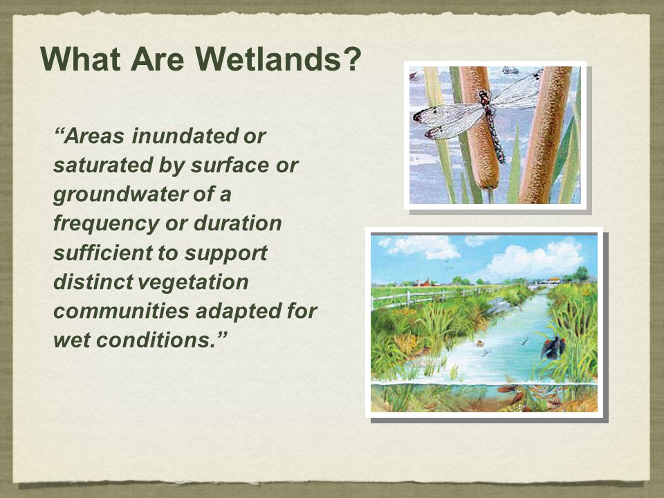 What Are Wetlands Areas inundated or saturated by surface or
