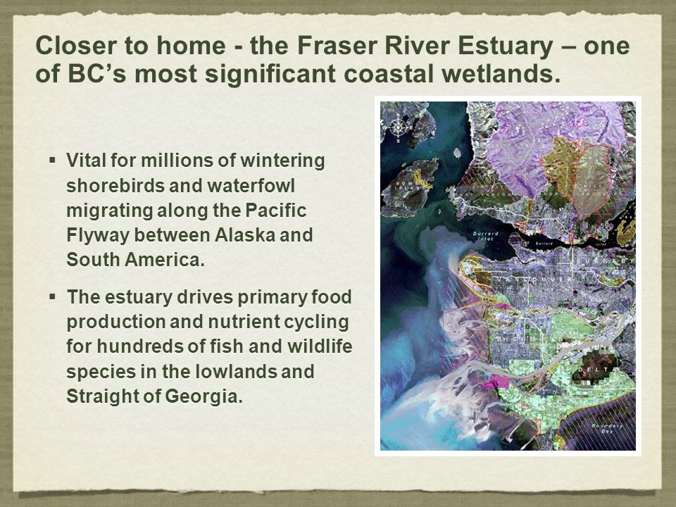 Closer to home - the Fraser River Estuary – one of BC's most significant coastal wetlands.